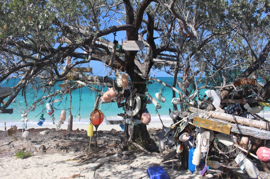 Bahamas Calling Card Tree