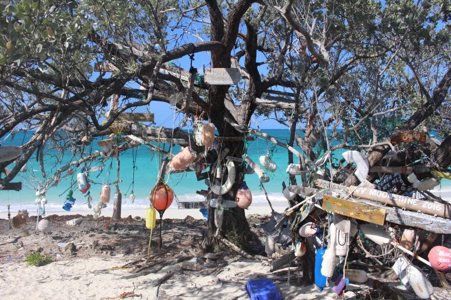 Bahamas Calling Card Tree
