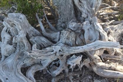 Bahamas Driftwood2