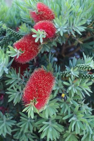 Capetown Flora2