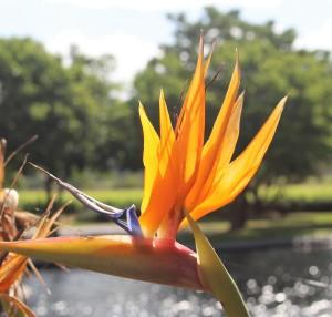 Capetown Flora3
