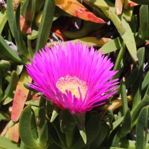 Capetown Flora4
