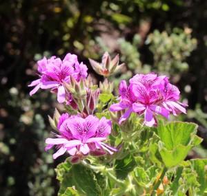 Capetown Flora5