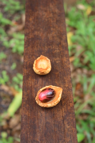 Carib Nutmeg and Mace