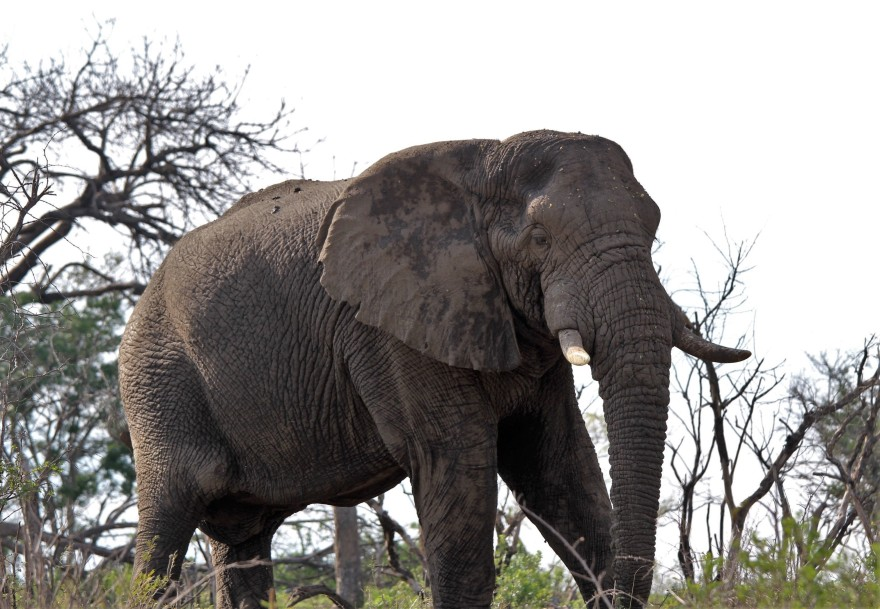 Durban Elephant
