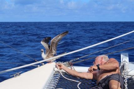 Indian Ocean Bird2
