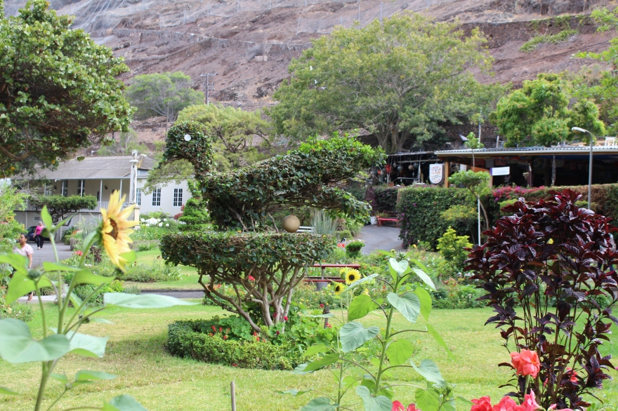 South Atlantic St Helena Gardening