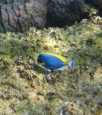 Thai Snorkel2
