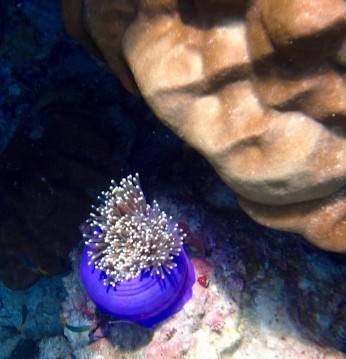 Thai Snorkel3